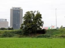 Lindebomen Eikendonk behalen vijfde plek bij Boom van het Jaar
