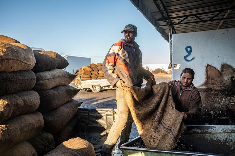 Boeren laden hun geoogste olijven uit bij olijfolieproducent Bashir Boukhris, net  buiten de stad Sfax. Beeld Sven Torfinn / de Volkskrant