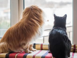 Baasjes van gechipte honden en katten vanaf 1 mei moeilijker op te sporen