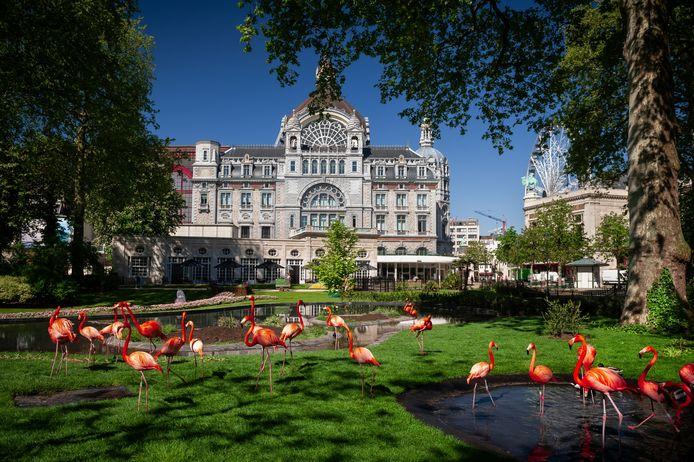 De flamingo's in de ZOO