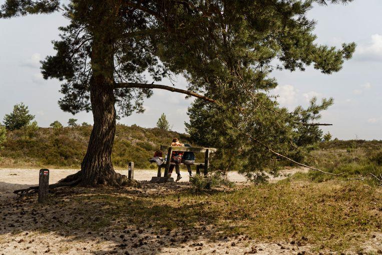 Wandelaars rusten even uit op een bankje in het natuurgebied van de Kalmthoutse Heide. Beeld Eric de Mildt