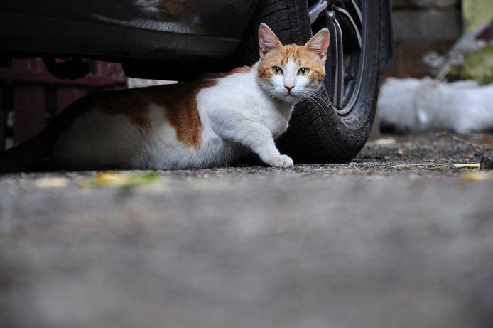 Een zwerfkat kat onder een auto.