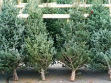 Zo geniet je maximaal van je kerstboom: laat hem eerst een nacht in de koude gang staan