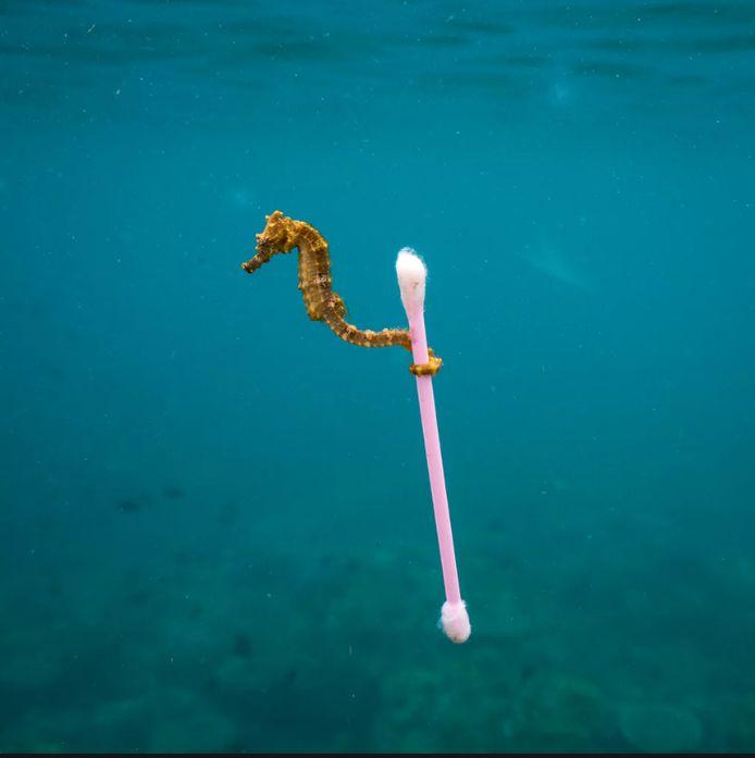 Justin Hofman / Wildlife Photographer of the Year