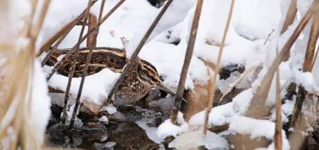 Winter zet de saaie vogelwinter op z'n kop
