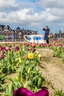 Tulpenveld naast station maakt plaats voor openluchtbioscoop