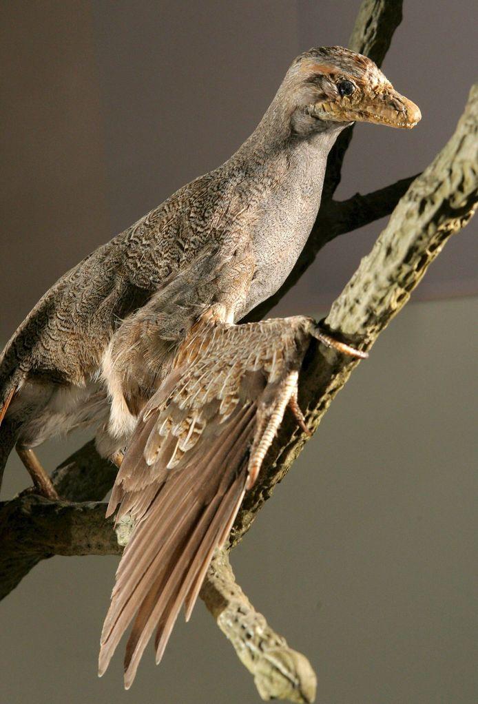 Een impressie van het mogelijke uiterlijk van de oervogel Archaeopteryx is te zien op de Friedrich Schiller Universiteit in Duitsland