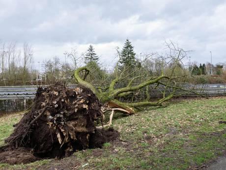 Storm: zware windstoten nemen snel af in de nacht