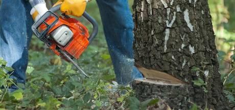 Bomenkap voor paardenbak levert Staphorster flinke boete op
