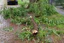 Weer breekt een tak af van een inmiddels beruchte boom in Breda. Ditmaal valt de schade mee.