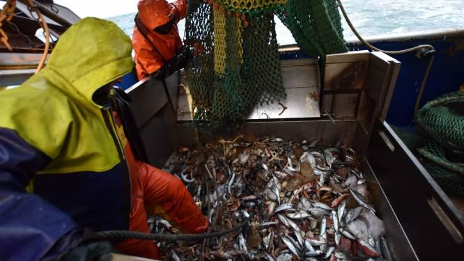 """Britse vissers net als Europese collega's woedend: """"We zijn in uitverkoop gedaan"""""""