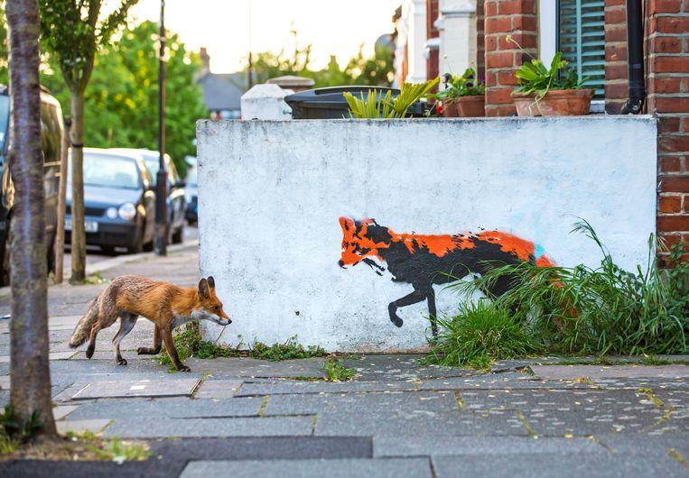 Een vos vlakbij het huis van fotograaf Matthew Maran in Noord-Londen.    Beeld Matthew Maran