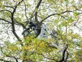 Man zit urenlang in boom uit protest tegen kap in Rotterdam-Noord