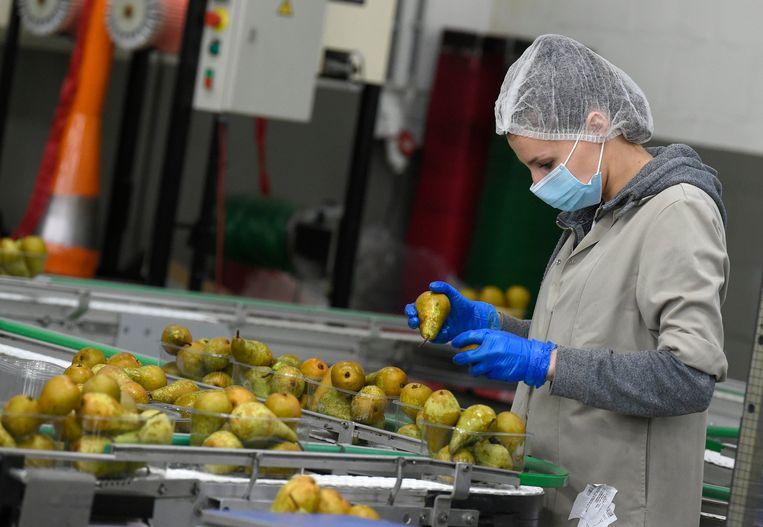 Een arbeider in een fruitbedrijf.  Beeld Photo News