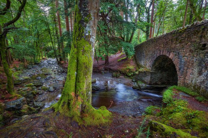 La forêt de Tollymore.