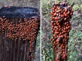 Zoveel lieveheersbeestjes zag je nog nooit bij elkaar!