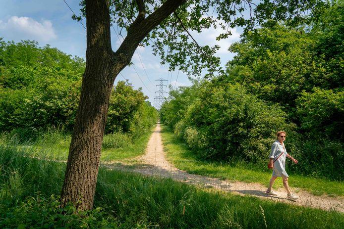 De rioolbuis moet onder het pad parallel aan de Veedijk komen te liggen. Het bos ernaast is een jaar of twintig geleden aangepoot.