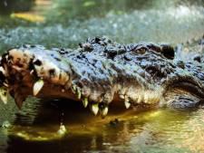 Krokodil grijpt drone tijdens filmen documentaire: 'Dat wordt moeilijk uitleggen aan mijn baas'