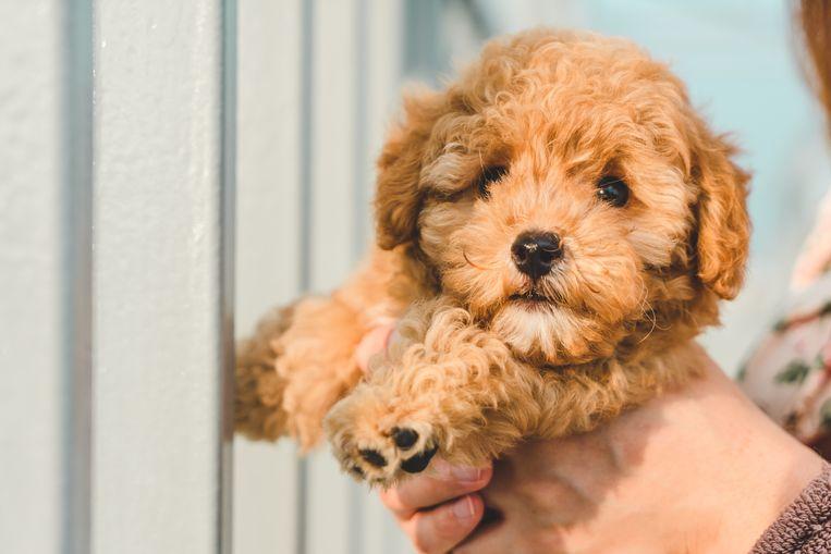 De leukste hondennamen Beeld Getty Images/iStockphoto