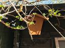 De klimhortensia is een bij vogels zeer geliefde muurbedekker.