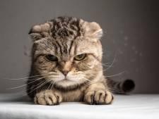 Dierenbeul stopt stok van 20 centimeter met doornen in achterwerk van kat in Maarssen