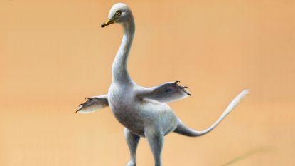 """""""Eerste bewijs van zwemmende dino's"""": nieuwe soort lijkt kruising tussen zwaan en 'klassieke' dinosaurus"""