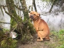 Un chasseur découvre un chien abandonné attaché à un arbre dans la nature