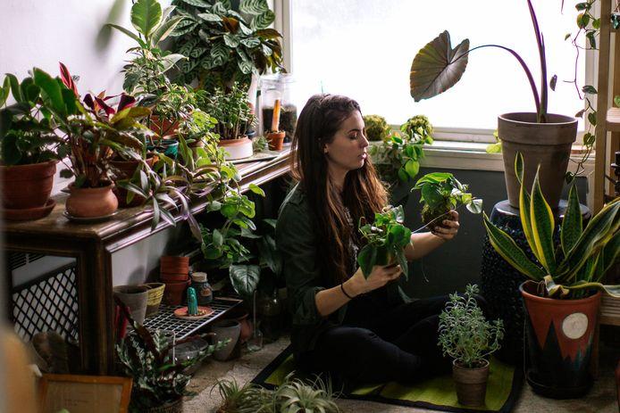 Planten zijn positief voor je geluksgevoel, maar verwacht niet dat ze de lucht in je huis verversen.