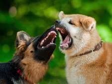 Loslopende honden ingeslapen na fatale aanval kat in Harlingen, ander hondje 'verscheurd'