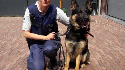 Politiezone Bodukap telt nu ook hond in de rangen
