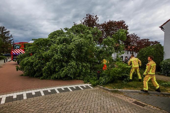 Brandweerlieden zagen de boom in stukken.