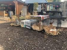 Tientallen verwaarloosde dieren bij kinderboerderij, opvang in Zwolle schiet te hulp: 'Dit is onbegrijpelijk'