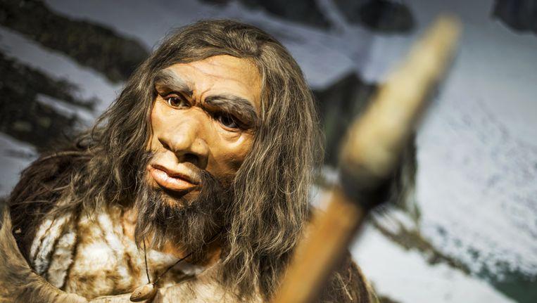 Een Neanderthaler uit kouder oorden. Beeld anp