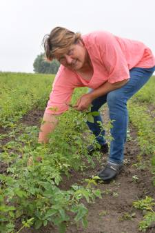 Kweekster Geertje van der Krogt van de Bierkreek: 'Rozen kweken is eigenlijk hetzelfde als voor je kinderen zorgen'