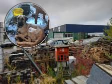 Buurt schrikt van verwaarloosde honden tussen eigen poep in Dronten: 'Deze gasten zijn niet zo vriendelijk'