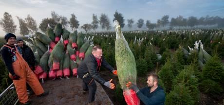 Kerstboom kopen? Wees er snel bij! 'Mensen willen er twee in plaats van één dit jaar'