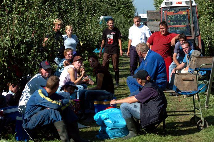 Archieffoto tijdens perenoogst bij Van 't Westende. In 2009 werkten er naast plukkers uit de regio ook toen al mensen uit onder meer Polen.