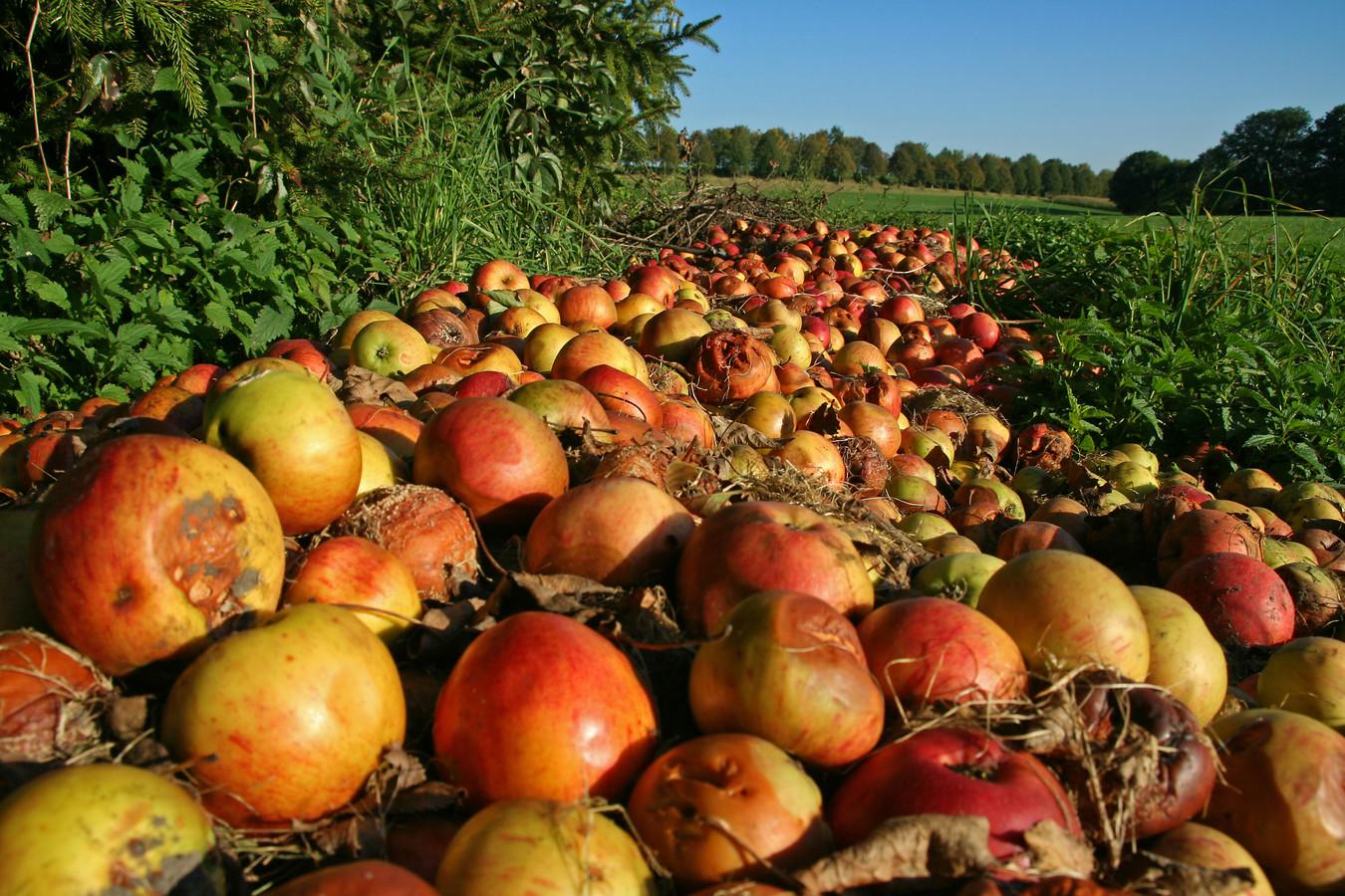 Oogst op het land krijgt dankzij de app tegen voedselverspilling een nuttige bestemming.