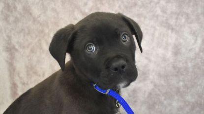 Puppy Ronnie diende als schattig kerstcadeau, nu is hij de eerste hond van 2018 die gedumpt werd in asiel