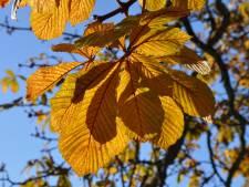 'Gekapte bomen Helenaveen staan los van werkzaamheden'