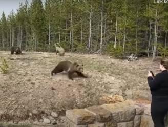 Amerikaanse komt te dicht bij beer en wordt bijna aangevallen, nu moet ze paar dagen de cel in en fikse boete betalen