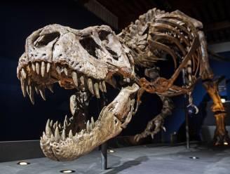 Gigantische Tyrannosaurus Rex liep langzamer dan de mens