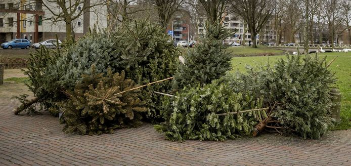 Themabeeld - oude kerstbomen
