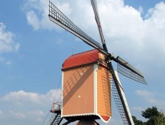 """Windmolen Nieuw Leven wordt opgefrist: """"Vooral nieuw laagje verf nodig"""""""