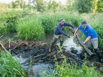 """Werken aan Vijversbeek in Tremelo garanderen afvoer water en behoud beverdam: """"Alles gebeurt met de grootste omzichtigheid"""""""