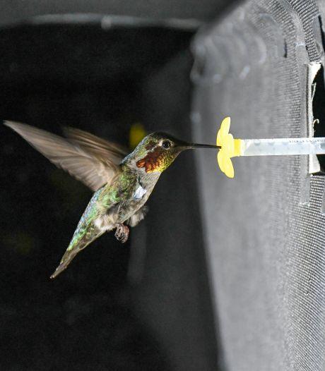 'Hummende' kolibrie leert drone stiller vliegen