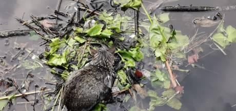 Gemist? Watervogels voorkomen dood van kat en 'goedkope' woningen goudmijn voor beleggers
