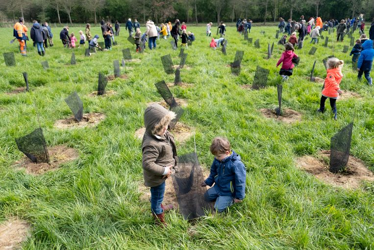 RUISBROEK Op het weiland tussen de dijk van het Hof ter Zielbeek en de Zielbeek planten leerlingen van de Vrije basisschool Sint-Carolus een bos aan