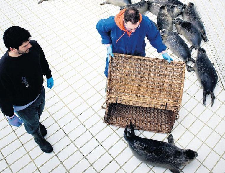 Twee verzorgers in de zeehondencrèche. Beeld Reyer Boxem