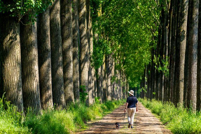 Een wandelaarster in het Wijboschbroek, een van de natuurgebieden in Meierijstad.